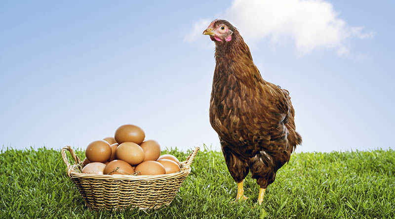 Eggcellent Idea! Graphite Permanent Mold Helps Incubator Care for Eggs